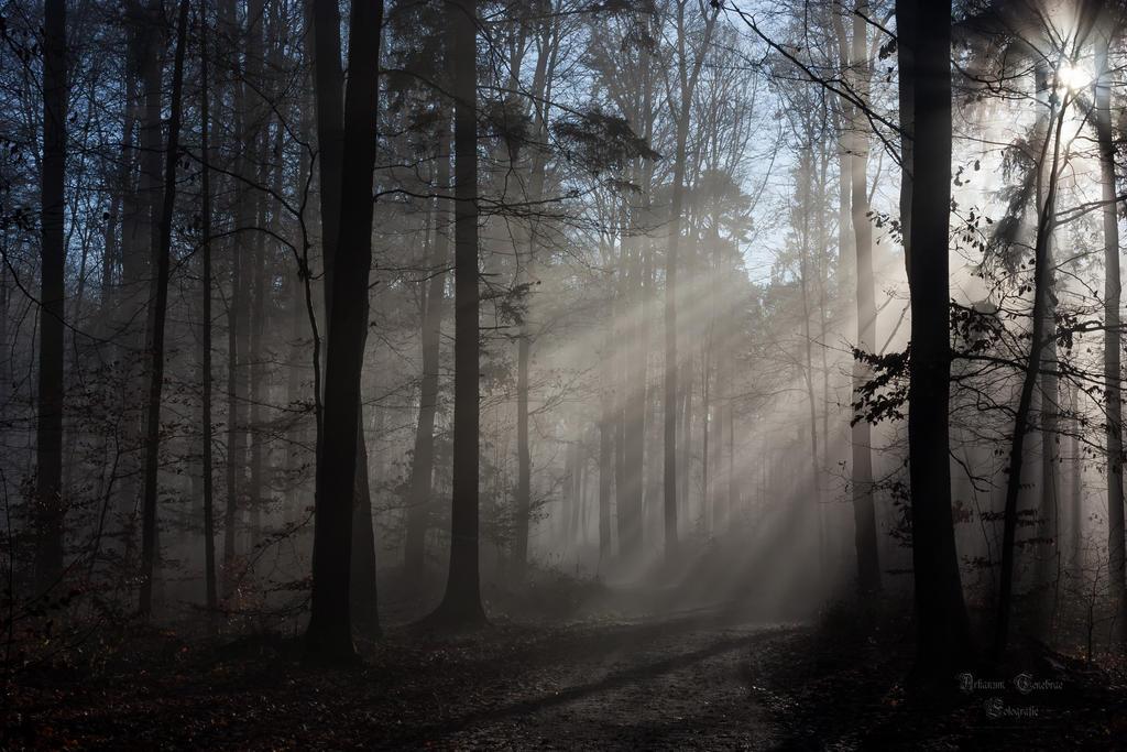 غابات Forests through_the_fog_fore