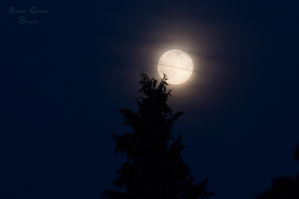 blue moon by ArkanumTenebrae