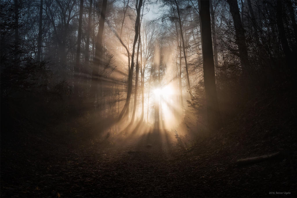 The morning by ArkanumTenebrae
