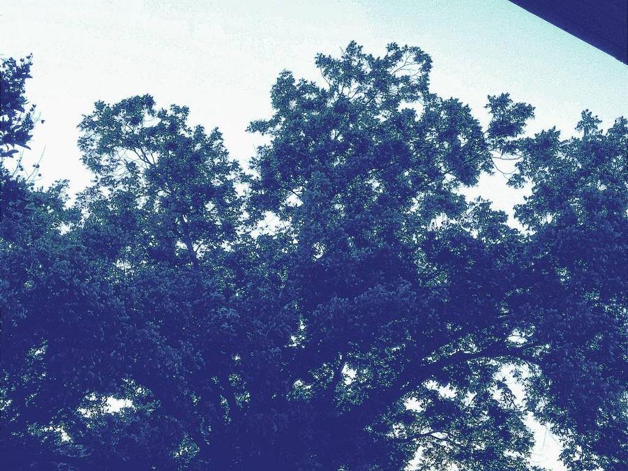 Trees 3