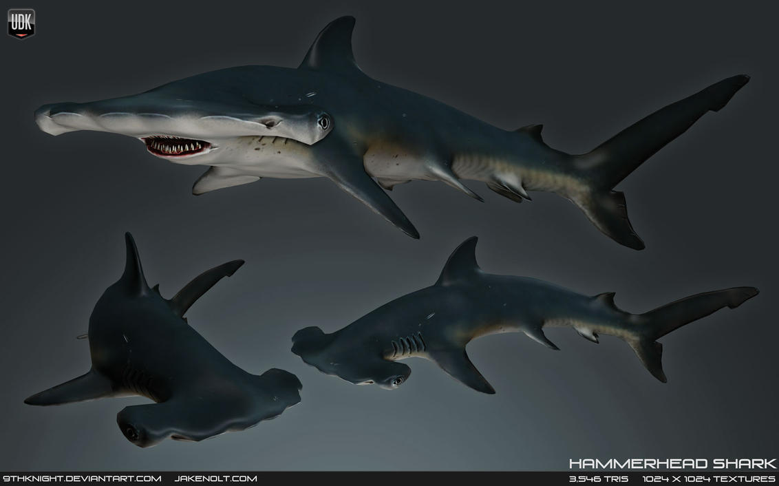 hammerhead_shark_by_9thknight-d6ds7g6.jpg