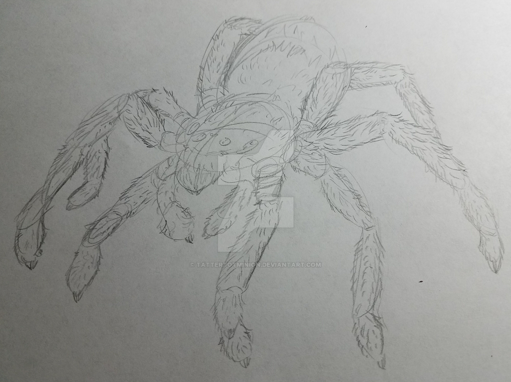 Spider doodle and reference used by TatterTotMinion