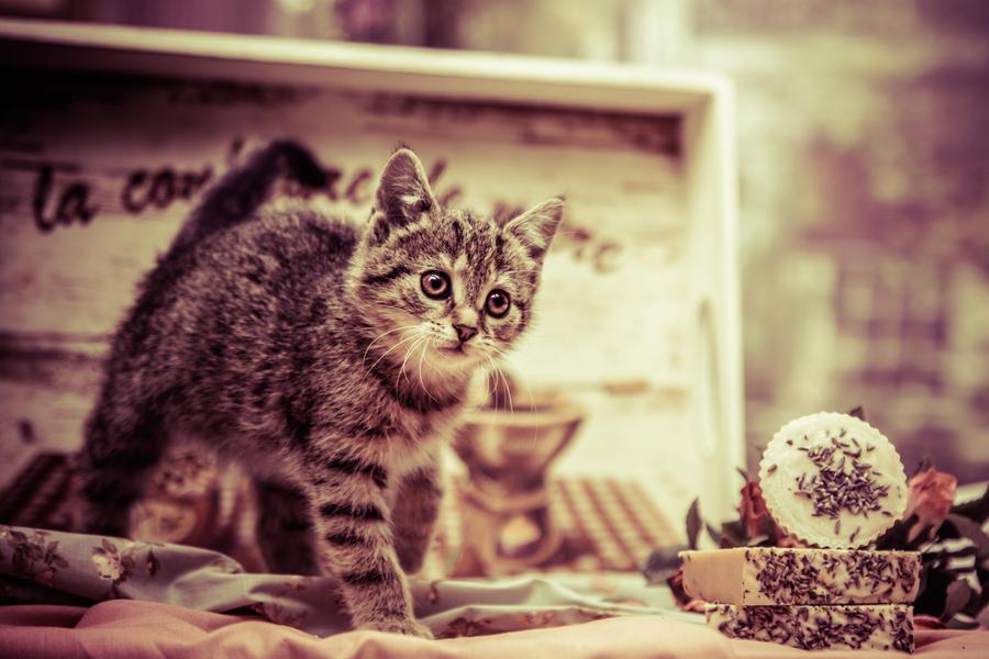 Sweet kitty by PROfotoEU