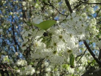 White flower by bestredhalloween