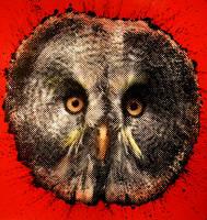 Owly $h?t by kingstom