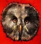 Owly $h?t