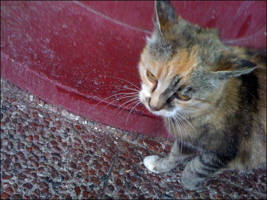 swedish cat by firstdragonrider on deviantart