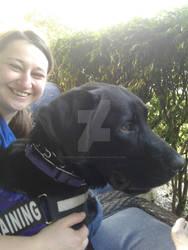 bently my service dog