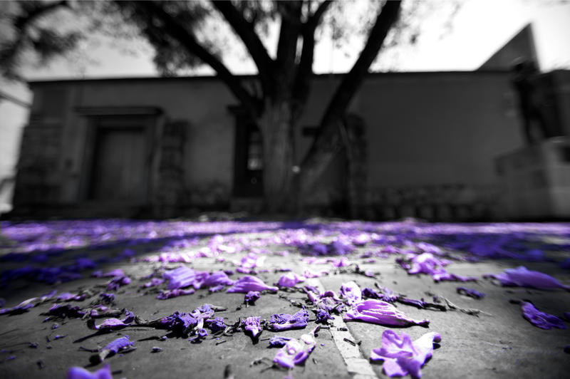 Purple tree by PasoLibre