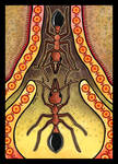 Ant as Totem Redo