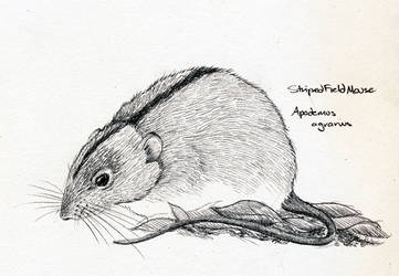 Striped Field Mouse by Ravenari
