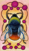 Red Bumblebee (Bombus lapidarius)