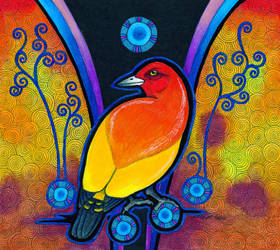 Flame Bowerbird as Animal Teacher