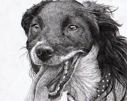 Dog Portrait 9