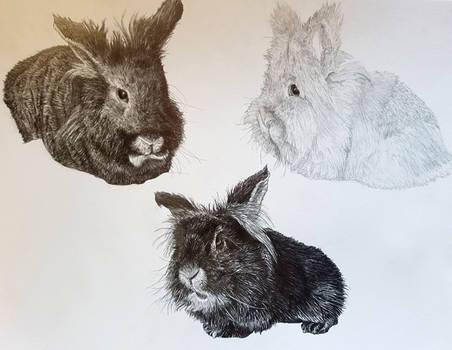 3 Bunnies