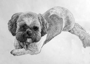 Dog Portrait 10