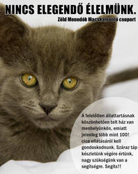 Facebook advertisement for a cat shelter V. by KungfuHamster
