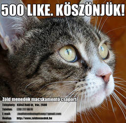 Facebook advertisement for a cat shelter VI. by KungfuHamster