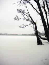 Wintry View