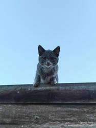 Cat by Duophased