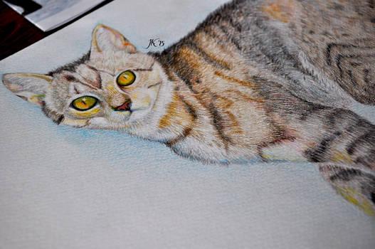 Illustration of cat.