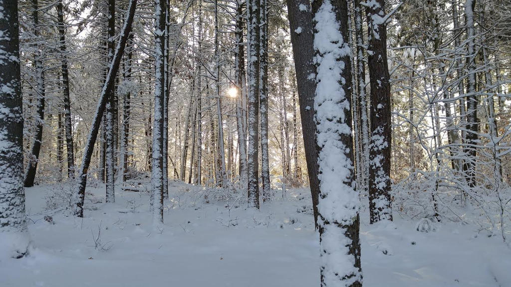 Morning Winter Sun by AshFlowers