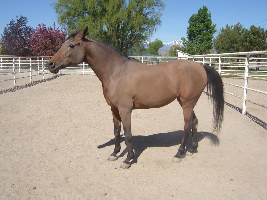 Horse 1 by Raistlhoff