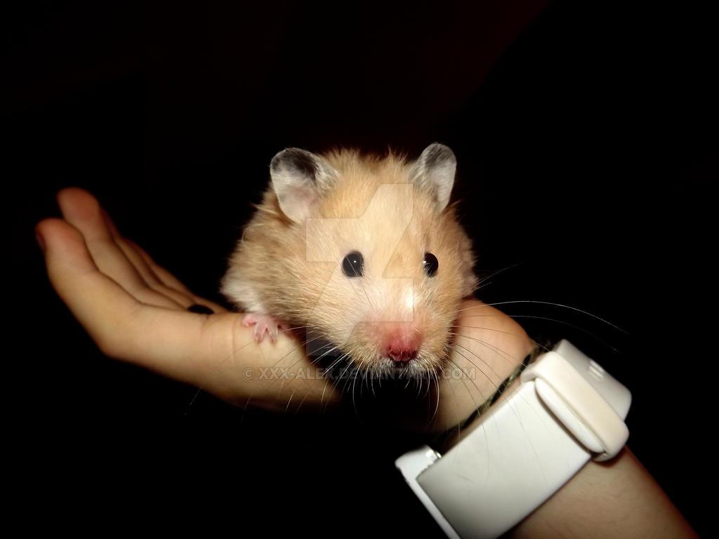 Hamster xxx Video de xnxx
