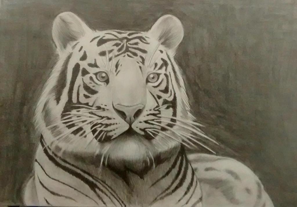 Tiger Pencil by Abwettar