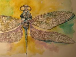 Dragonfly by lenischoen
