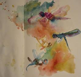 dragonflies in vivid colours