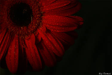 red flower by dif89