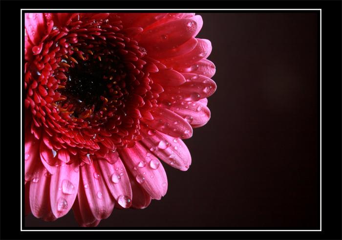 flower_drop_by_dif89.jpg