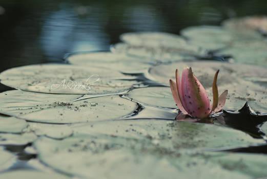 Water Bloom