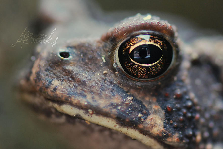 Self Portrait in a Frog's Eye by ReachForTheStarfish