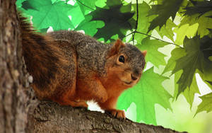 Wood squirrel by xXHerculeXx