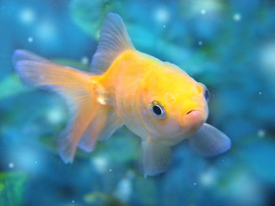 Nemo wallpaper > Nemo Papel de parede > Nemo Fondos