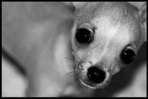 Mascota: Bambi Pet
