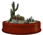Container Garden-cacti