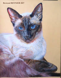 Ficelle siamese cat WIP5 : just before background!
