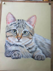 Tabby Kitten without background by Reybert