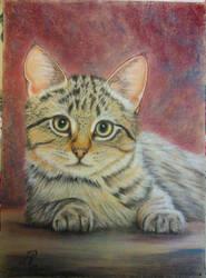 Tabby Kitten Final (with bckgrd) 24 x 32 cm by Reybert