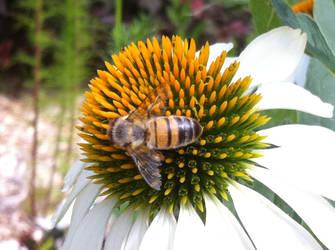 Bee on Flower (Spring 2017) by Reybert