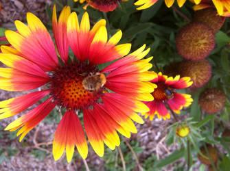 Bumblebee on Flower (Spring 2017) by Reybert