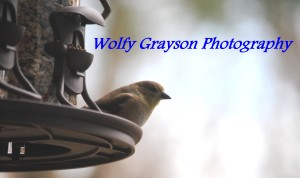 Wolfy-Grayson's Profile Picture