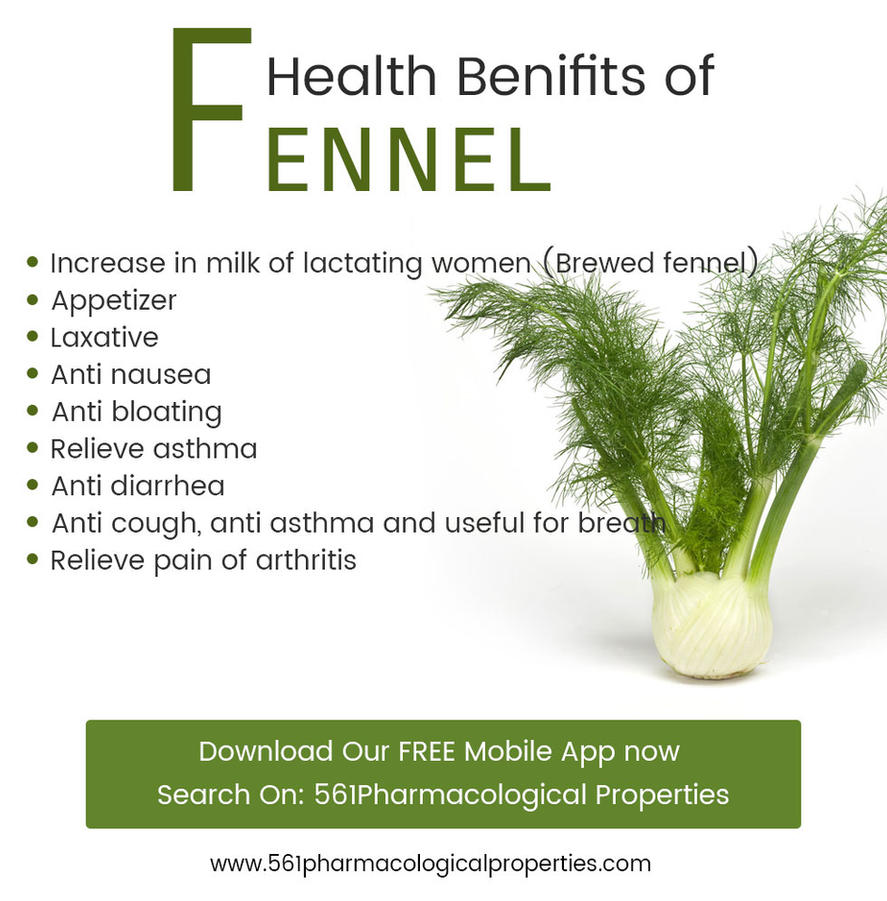Fennel useful properties and application 89