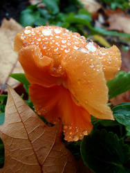 Autumn's diamonds by tapsiphoto
