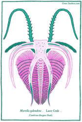 Marrella splendens by greer-stothers