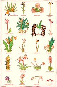 Rare Orchids