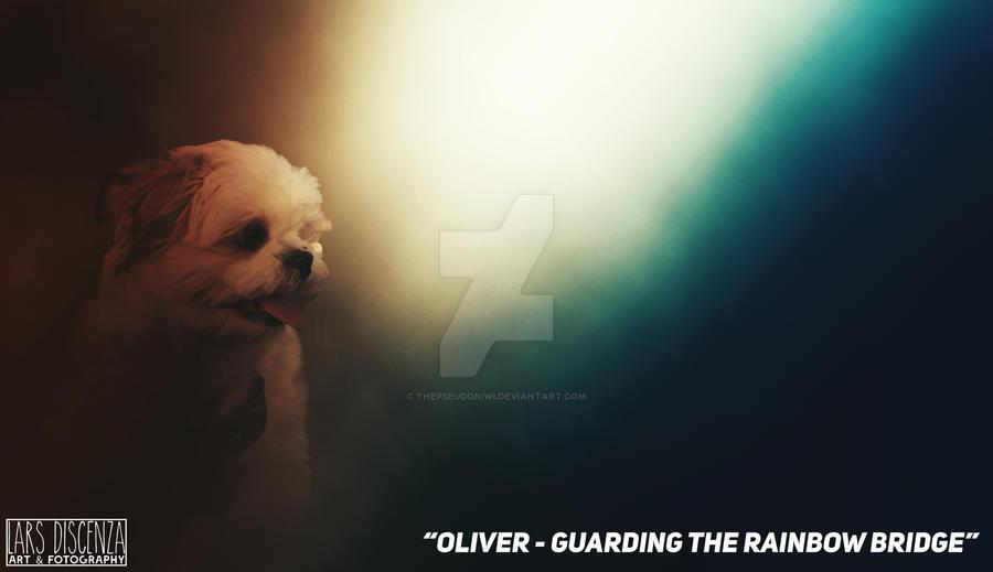 Oliver - Guarding the Rainbow Bridge by thepseudokiwi